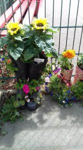 pic 1 garden