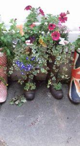 pic 3 garden