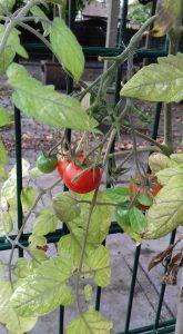 pic 4 garden