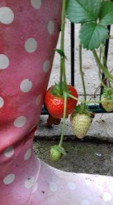 pic 5 garden