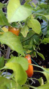 pic 7 garden