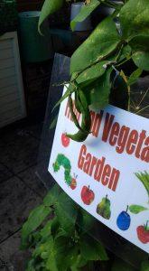 pic 9 garden